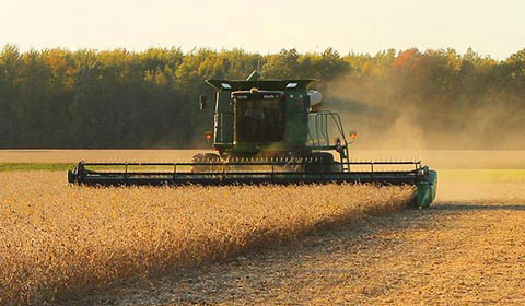 combine in field cutting soybeans